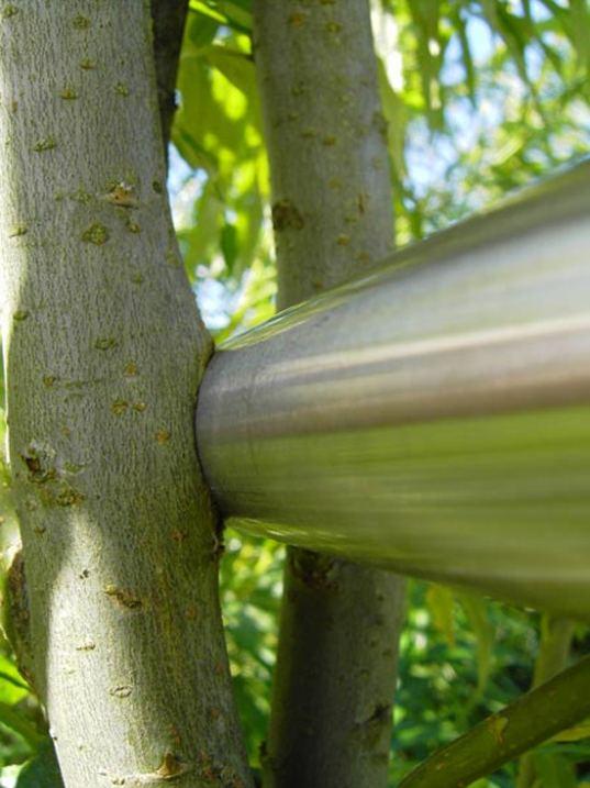 treearchitecture021