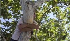 Joel Tauber_Sick-Amour_Hugging Tree_560