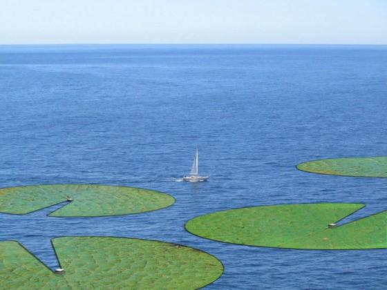 Meeresalgen: Algenanlage