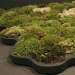 design-inspired-by-nature-carpet-2