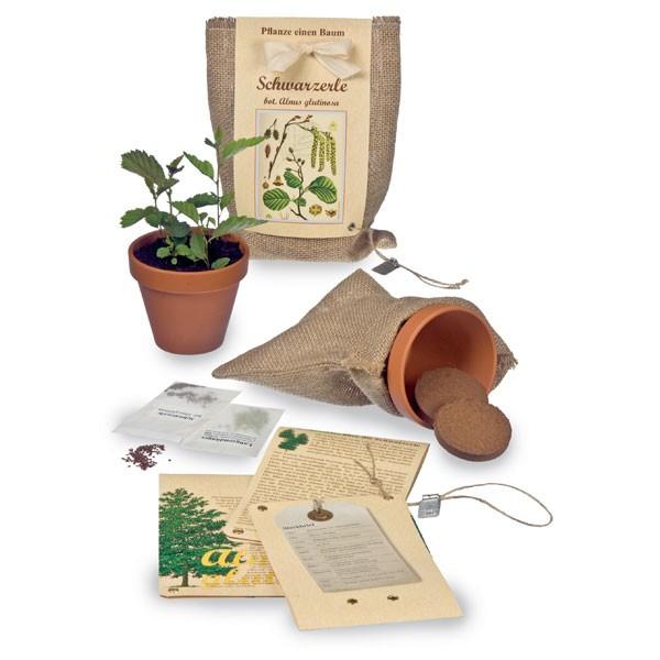 pflanze einen baum schwarzerle 72dpi lilli green magazin f r nachhaltiges design und lifestyle. Black Bedroom Furniture Sets. Home Design Ideas