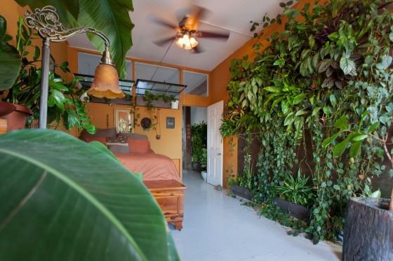 Summer Rayne Oaks - Indoor Garten