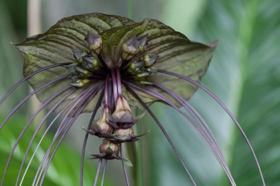 Summer Rayne Oaks - Flower