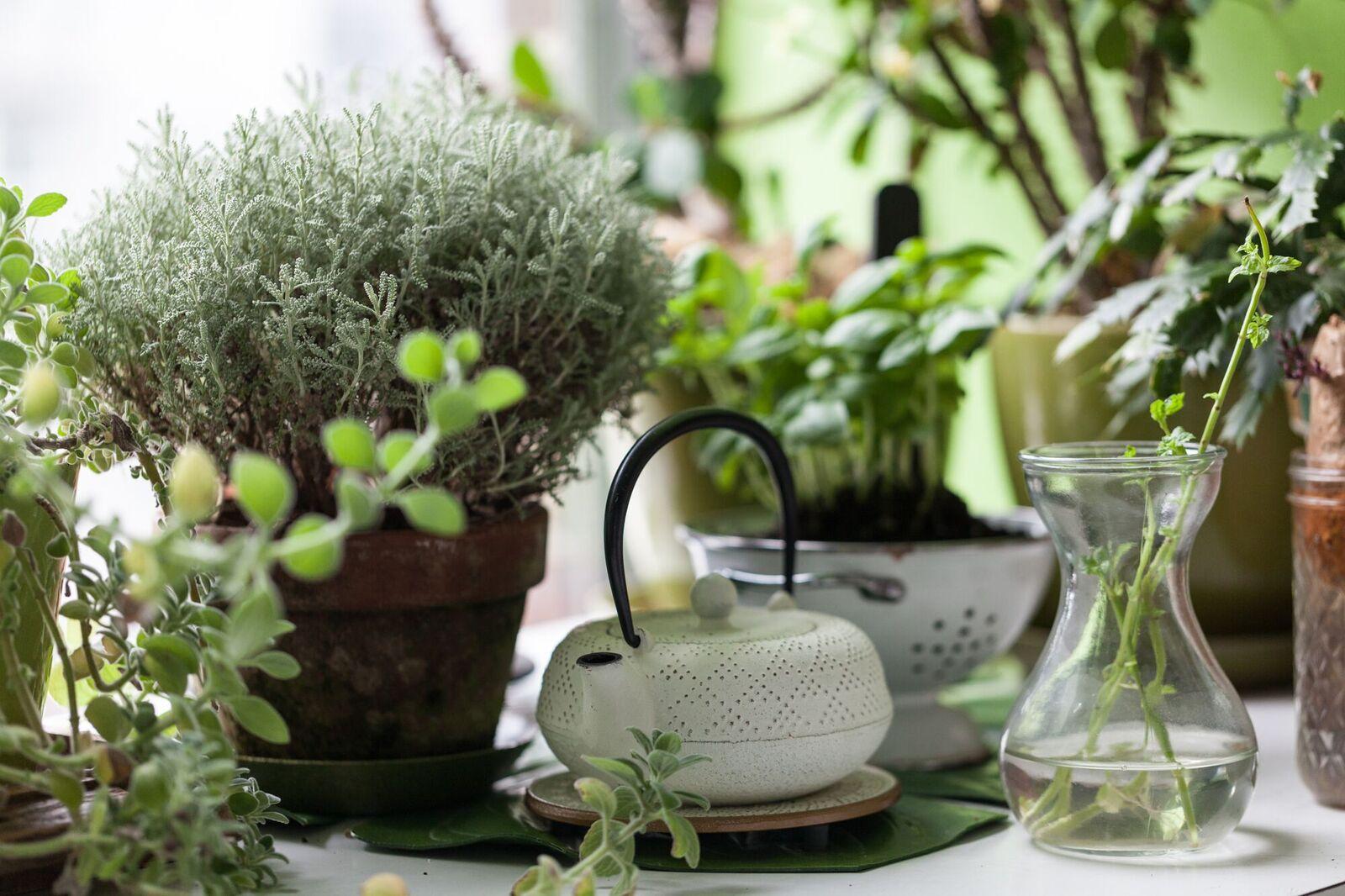 Der fabelhafte Indoor-Garten des Modells Summer Rayne Oaks – Lilli Green