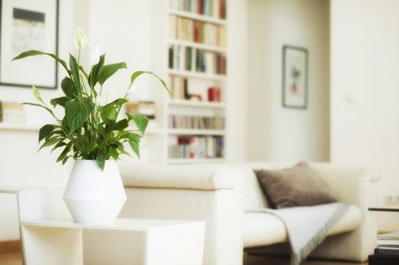 gr nes gedenken die erste bepflanzbare urne der welt lilli green magazin f r nachhaltiges. Black Bedroom Furniture Sets. Home Design Ideas
