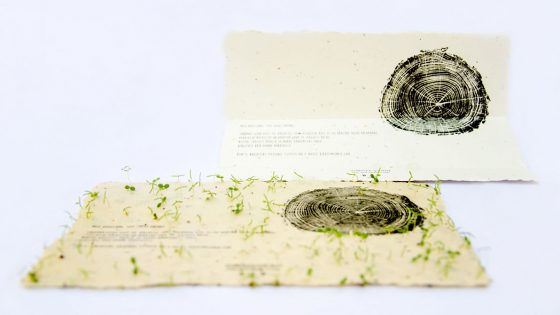 Blumen wachsen aus Papier