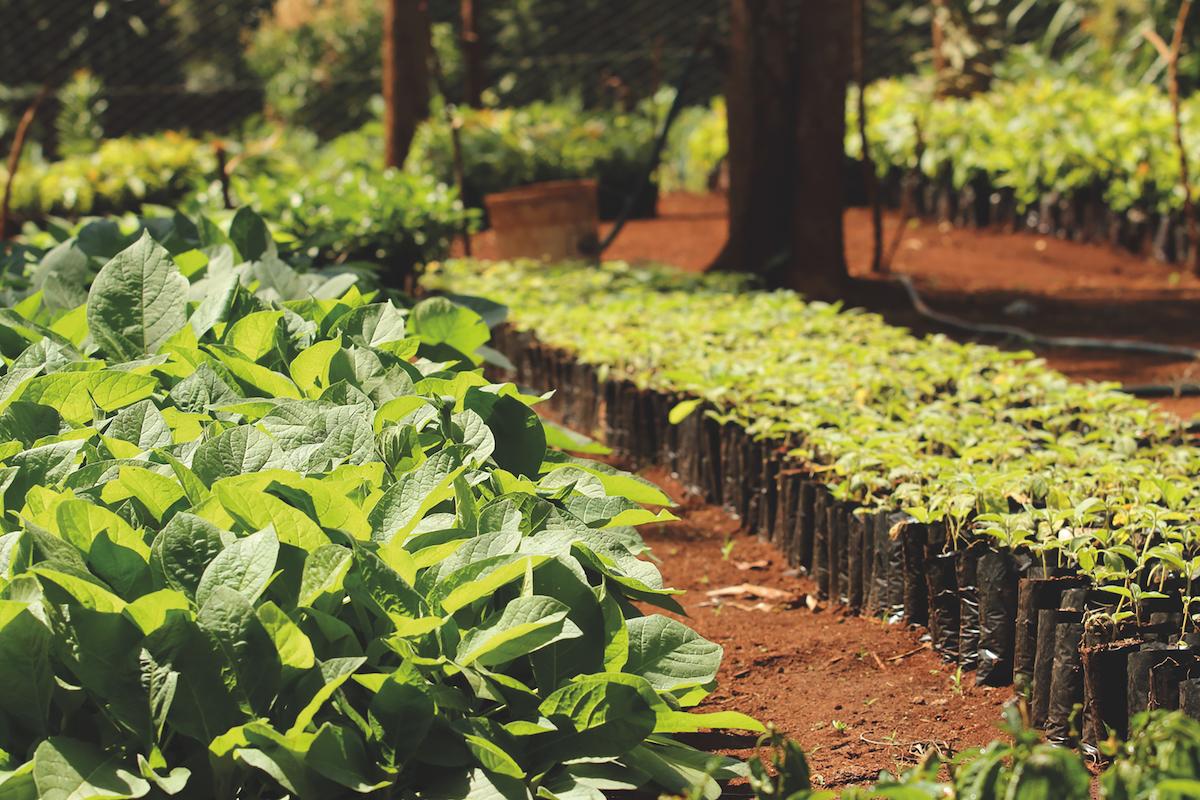 CO2-Kompensation von treedom - Baumschule in Kenya