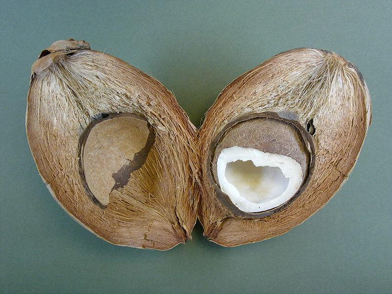 Nachhaltige Sonnencreme - Kokosoel als Sonnenschutz