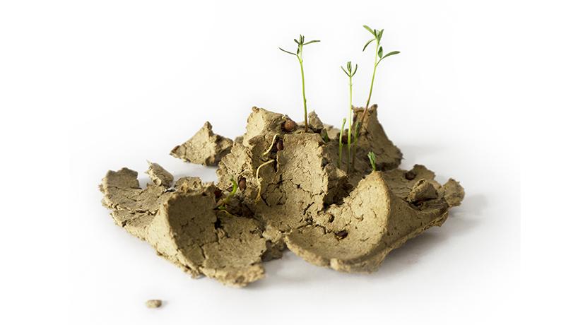 Circular Design - kompostierbare Verpackung aus Samen