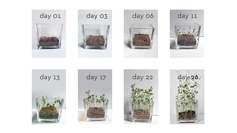 Circular Design - Verpackung kompostiert in 30 Tage