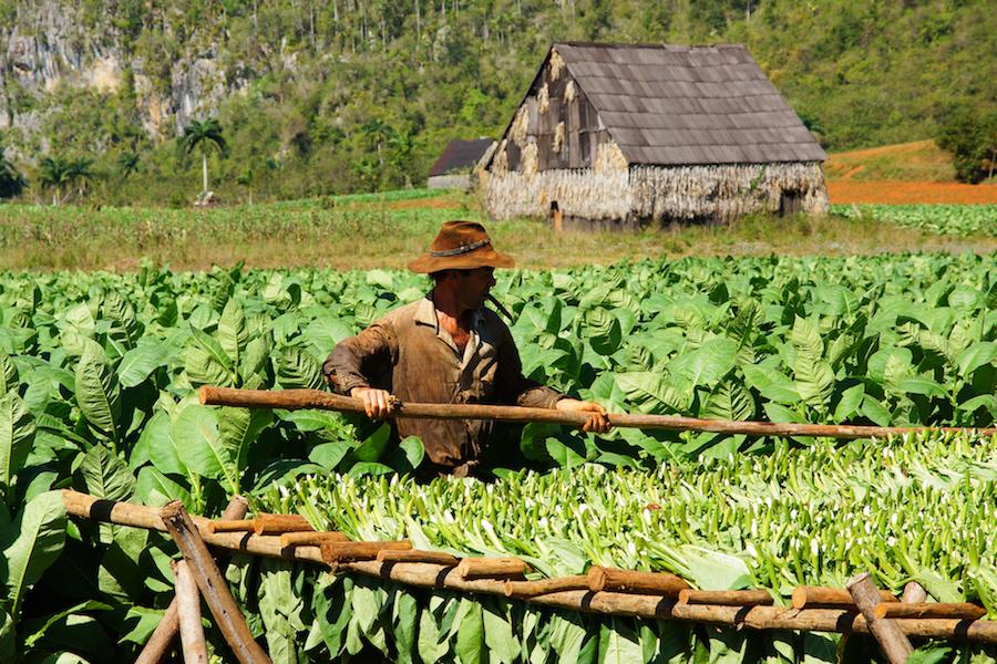 Fair Trade Reisen - Bauer auf Cuba