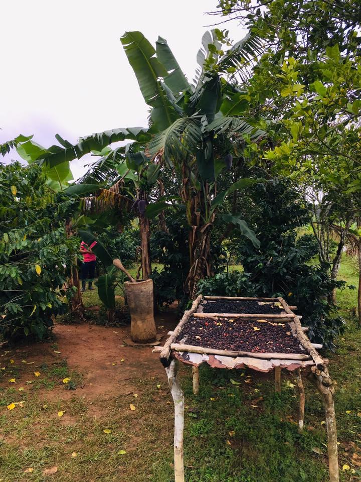 Fair Trade Reisen - Kaffee Plantagen