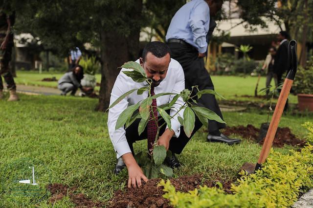 Weltrekord Baemepflanzen in Aethiopien - Premierminister planzt Baum