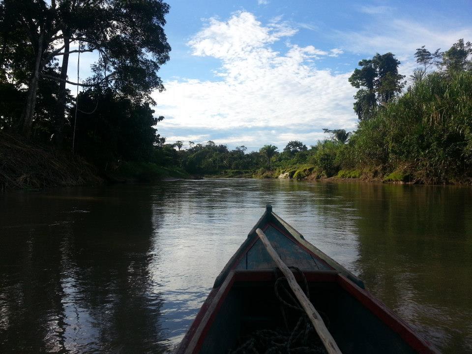 Amazonas Regenwald retten!