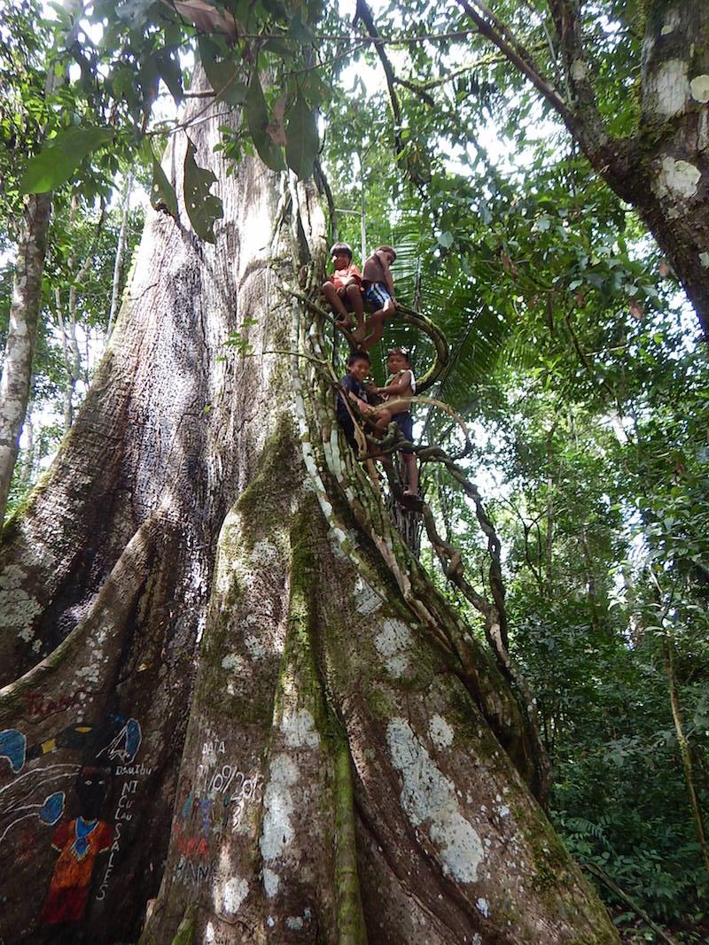Schoenes Spendeprojekt für Erhalt der Amazonas