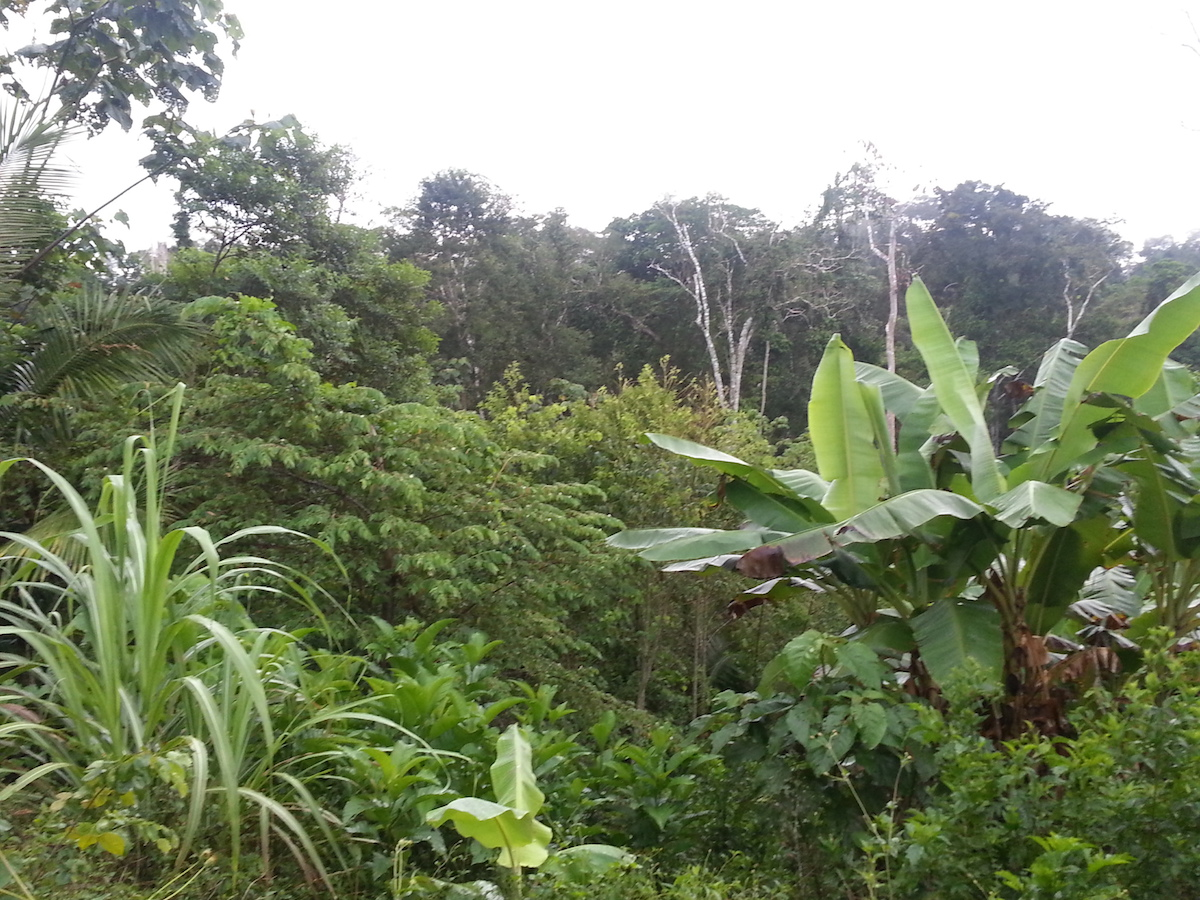 Amazonas retten!