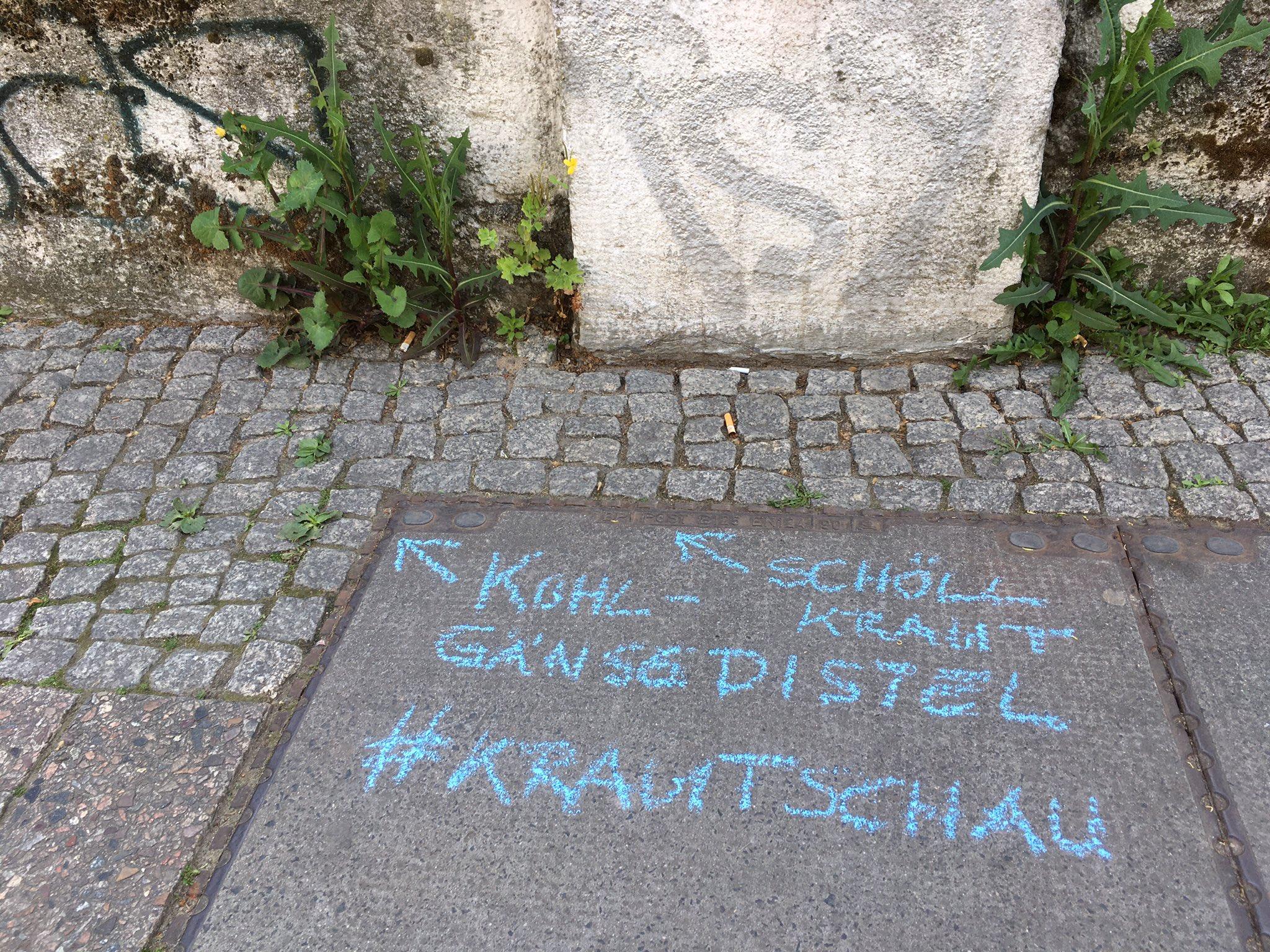 #Krautschau #Meeralsunkraut #Morethenweeds