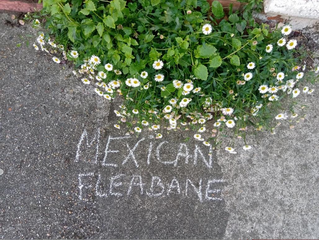Krautschau - Pflanzengraffitis von Morethenweeds
