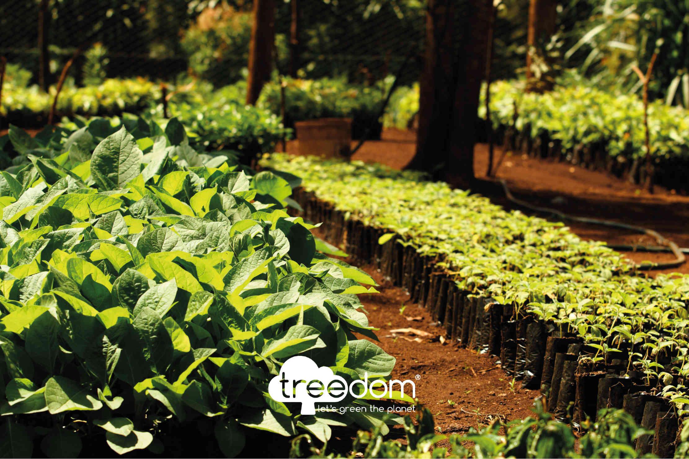 Baumschule für Baumpflanzungen
