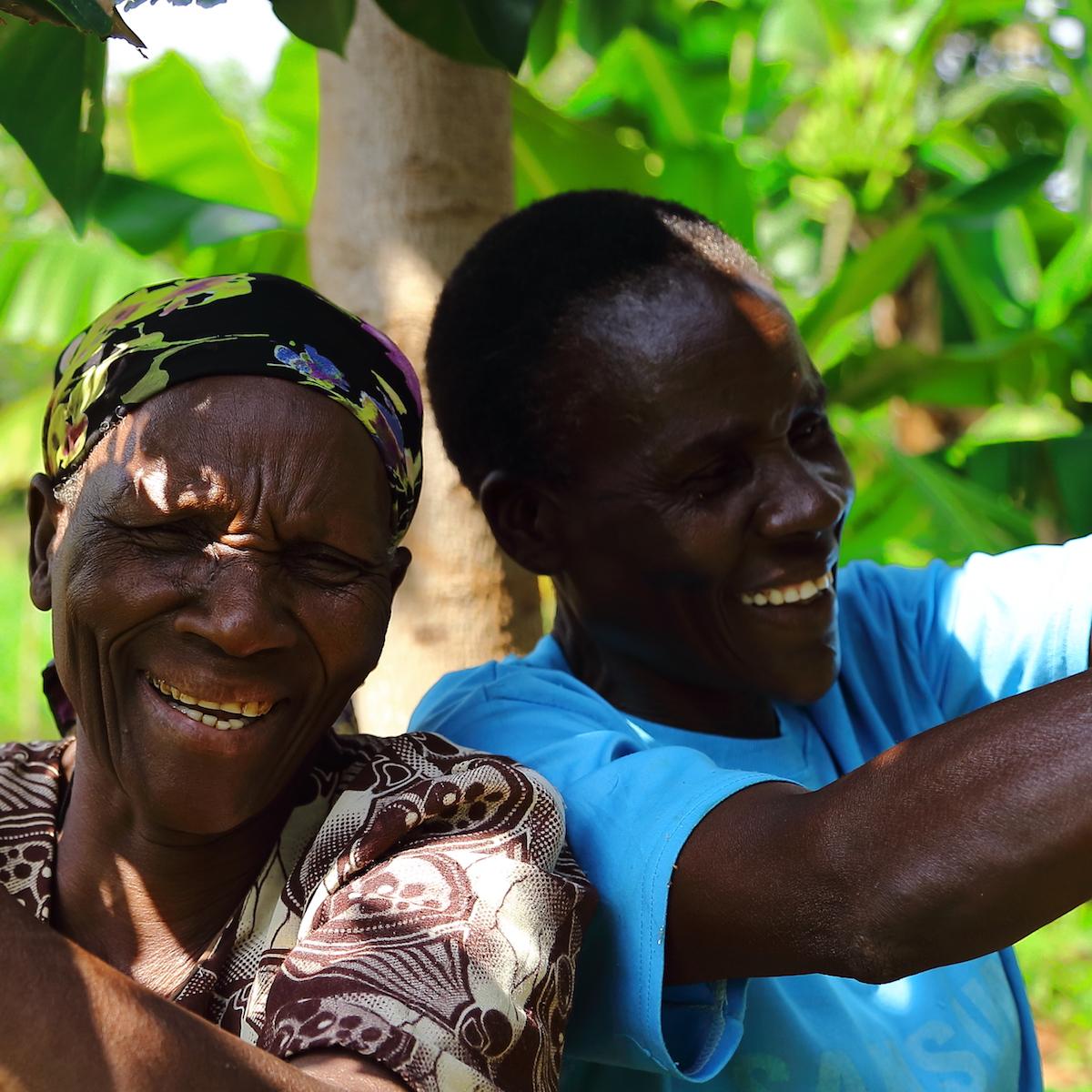 Weltumwelttag - Baeume Pflanzen und die Umwelt regenerieren